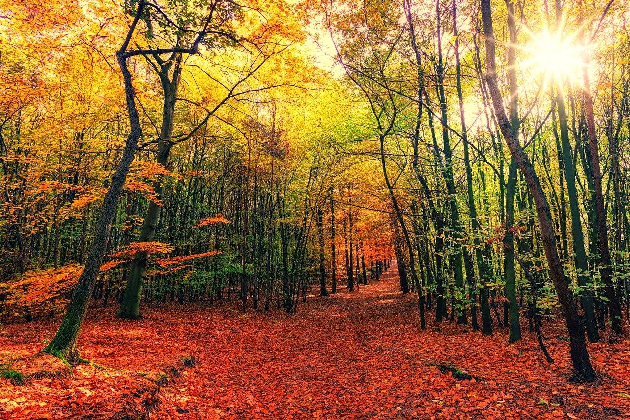 """""""Кога печална есен наближавa"""" – Кирил Христов"""
